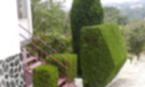 Abattage Rabattre de haie de cèdre Longueuil