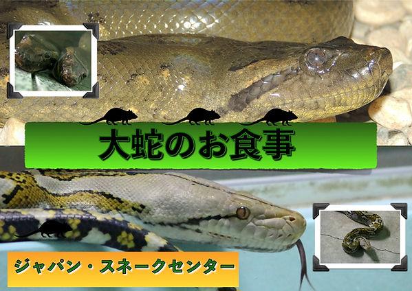 大蛇のお食事J.jpg