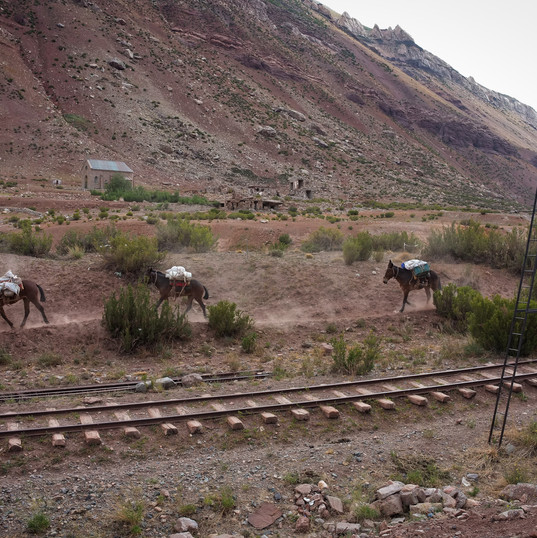 Vlak nahradily muly