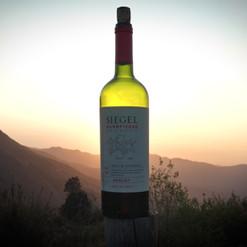 Vínice v okolí Santiaga