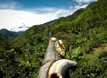 Ekvádorský vrabec :)