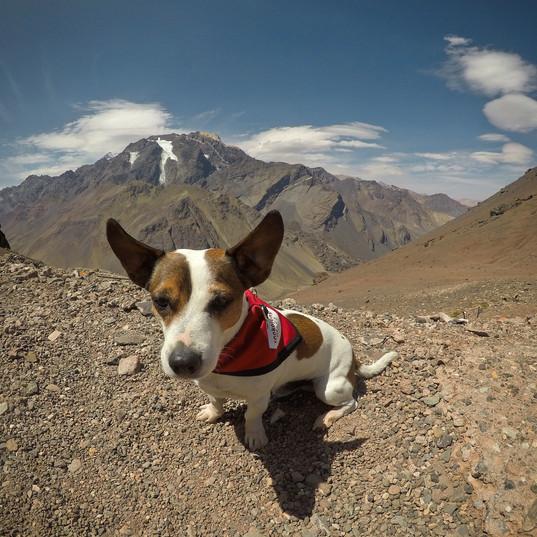 Bobík a vyčuhující Aconcagua