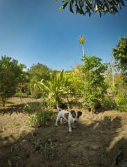 Bobík na zahradě
