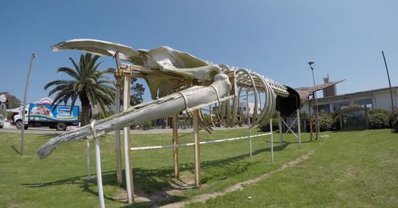 Velryba v La Palomě
