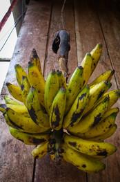 Banány jsou všude kolem