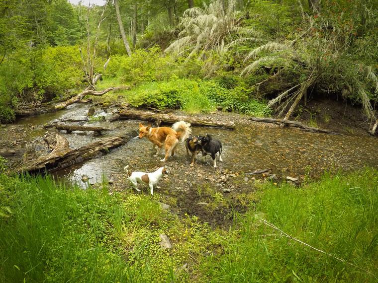 kamarádi v řece