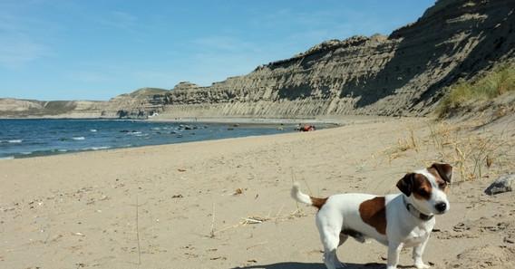 El perro de la playa