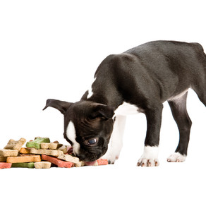 Üzenet egy mentőtiszttől: zárd el a kutyát, egy élet múlhat rajta