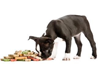 comer cachorro
