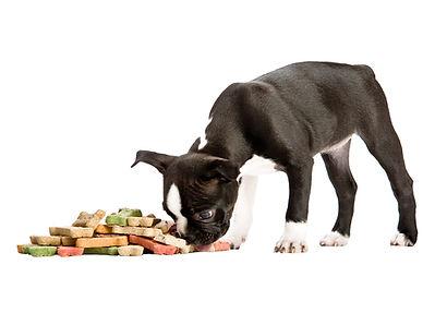 puppy eating treats