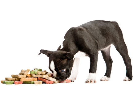Dogs Act Out their Dietary Mismatches....and So Do Cats!