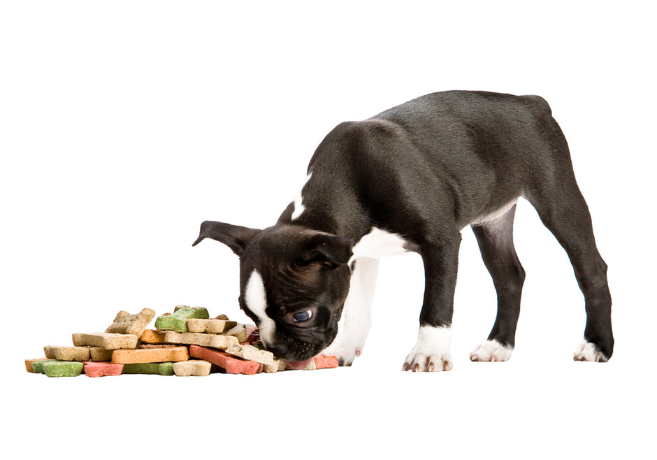 Doggie Treats:  Fruits Instead of Cookies?