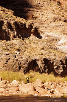 little-colorado-river--dive_49069784208_
