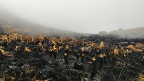 Autoridades ambientales evalúan los daños en el páramo de Santurbán