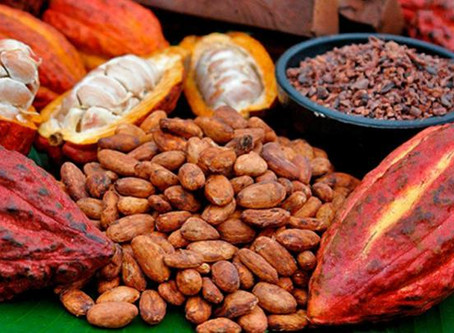 Cacao de Boyacá el mejor del mundo en premios Óscar de alimentos especiales
