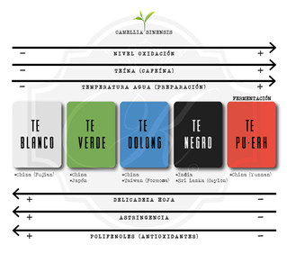 Diferentes tipos de té