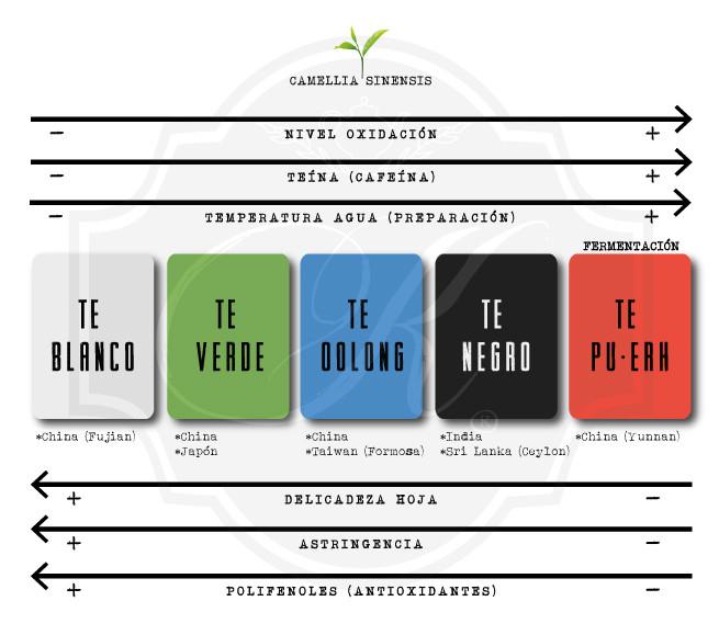Diferencia entre cada tipo de té