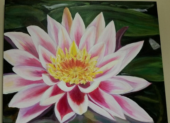 Acrylic Painting - Water Lilly Wall Art