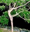 Danse%20de%20l'arbre.jpg