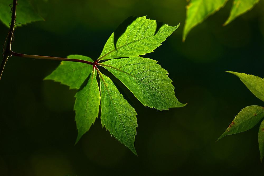Feuille d'arbre verte sur un fond sombre
