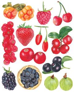 Berries-03-LR.jpg