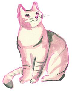 Cat-05-LR.jpg