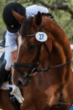 Dressage lessons in Dripping Springs