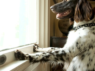 Does Your Dog Suffer From Separation-Related Problems?   Part 1