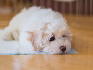 Does Your Dog Suffer From Separation-Related Problems? Part 2