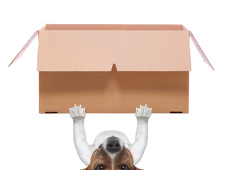 Moving house - The Reasons Dogs Often Struggle And How We Can Help Them To Cope.