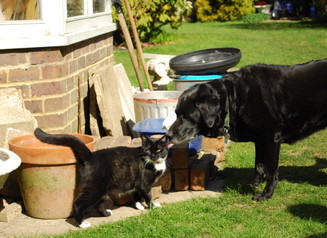 'Doing it properly can make a difference! How to introduce a new dog to your cat'