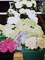 世界紀行 ESSAY,2『~花市場~』