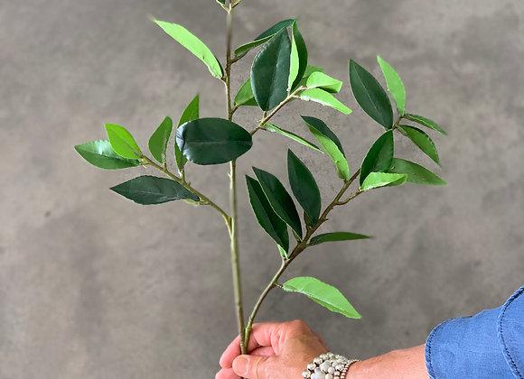 Green Pointed Leaf