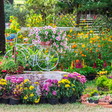 Your Summer Garden Could Be Toxic To Your Pets!
