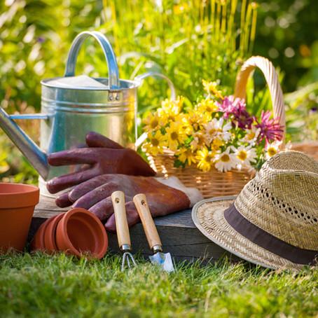 How to Create an Environmentally Friendly Garden