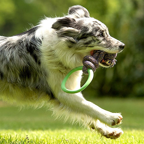 BecoPets Natural Rubber Hoop on Rope
