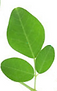 BEA_logo.png