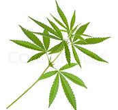 Cannabis_logo.png