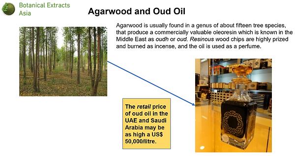Agarwood_outline.png