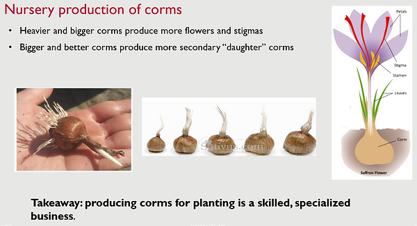 Corms_production.png