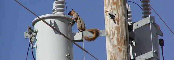 Squirrel-on-Powerpole-02.jpg