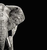 elephant-half_edited_edited.jpg