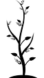 tree-sapling_edited.png