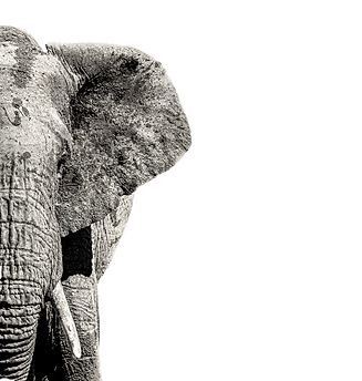 elephant-half_edited.png