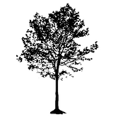 tree-small-silhouette_edited.png