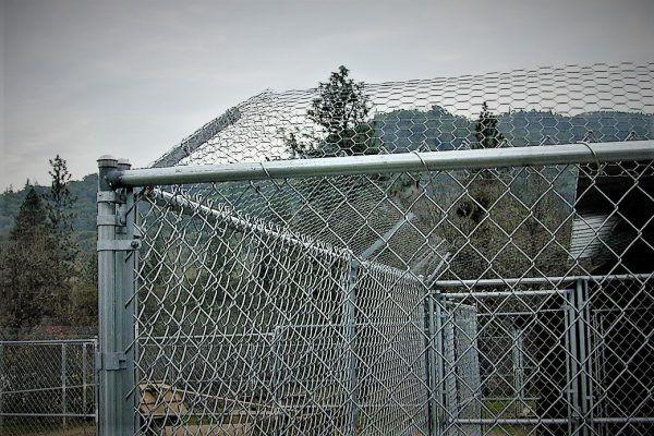 kennel.climb.barrier.jpg