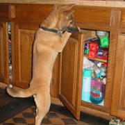 Opening kitchen cabinet