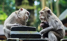 monkeys.png