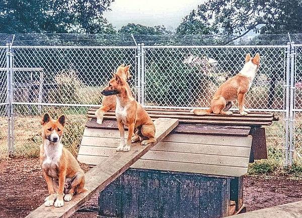 singers-fenced.jpg