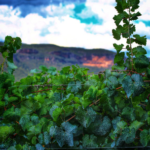 Have you visited this secret Blue Mountains winery?